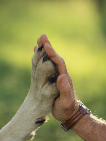 Animalismo/Humanismo